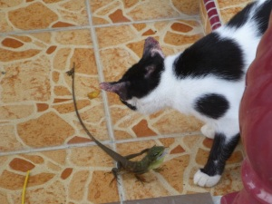 cat vs lizard