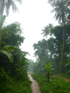 The jungle trail in the rain